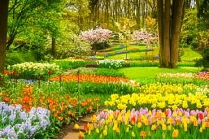 Amsterdam a květinový park Keukenhof...