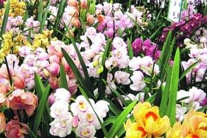 Největší výstava orchidejí v Německu...