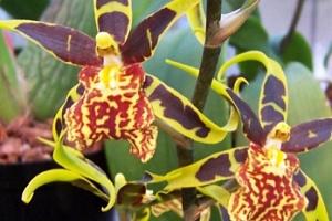 Největší výstava orchidejí v Rakousku...