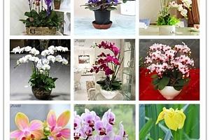 Semínka orchideje - mix barev...