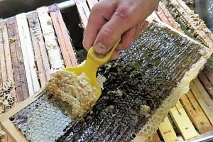 Vytáčení medu...