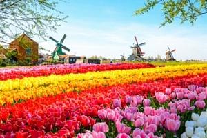 Keukenhof, Zaanse Schans a Amsterdam na 3 dny...