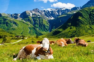 Vídeňské Alpy na léto s polopenzí a wellness...