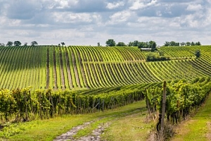 Jižní Morava: Penzion Pálava s neomezenou konzumací sudového vína a polopenzí...