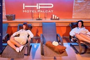 Hotel Palcát v Táboře na 2-4 dny pro dva s wellness a polopenzí...
