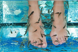 Netradiční péče: Rybí pedikúra Garra Rufa...