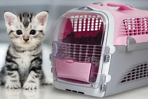 Plastová přepravka CAT IT Design Cabrio...