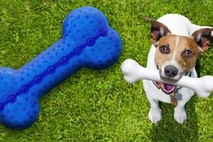 Gumová hračka pro psy Dog Fantasy kost...