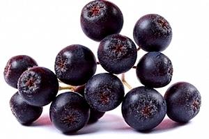 Velká ovocná sada keřů 7 kusů + 1 zdarma, borůvky, dřín, černý jeřáb, ostružiny aj....