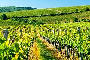 3denní vinařský pobyt pro dva a 2 děti do 6 let. Polopenze, neomezená konzumace vína a burčák....
