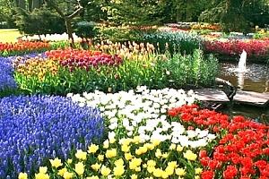 Jarní zájezd pro 1 osobu za tulipány do Holandska na 1 den. Keukenhof, Amsterdam, větrné mlýny aj....