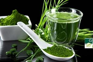 Zelený ječmen Green Health: 250 g prášku + shaker a poštovné v ceně...