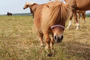 Farmářem na jeden den aneb den u koní...