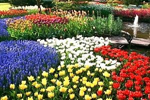 Zájezd do Amsterdamu pro jednoho s ubytováním,největší rozkvetlý park v Evropě Keukenhof....