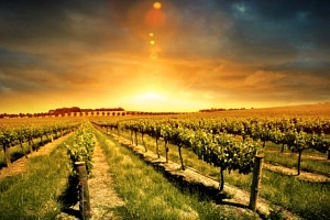 Slovácko: pobyt ve Vinárně u Tesařů s polopenzí a moravským vínem...