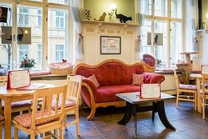 20% sleva na kávu a dort v první kočičí kavárně v Praze na Žižkově...