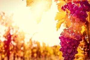 Jižní Morava s polopenzí a neomezenou konzumací vína v Penzionu V Zahraničí...