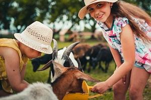 Mléčné výrobky ze Zlaté farmy ve Štětovicích kousek od Prostějova...