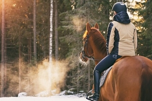 Jizerské hory pro milovníky koní v Hotelu Farma Vysoká *** s polopenzí a masáží...