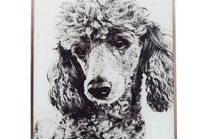 KARE DESIGN Obraz Frame Alu Poodle 60x40 cm...